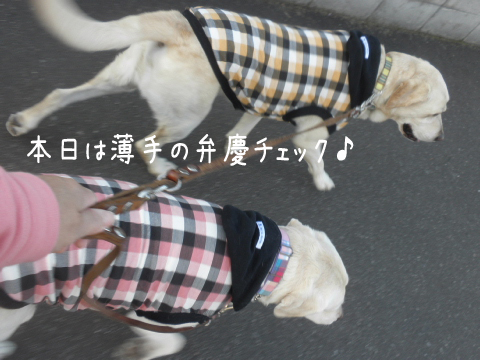 sanpo_20111021220347.jpg