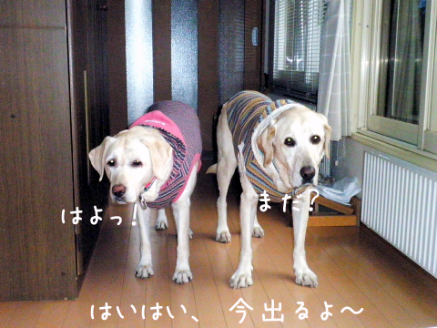 sanpomada_20111030223207.jpg