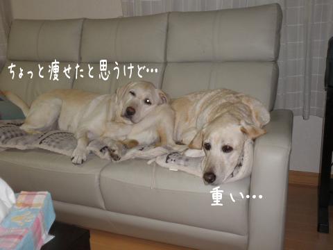 sofa1_20111017211611.jpg