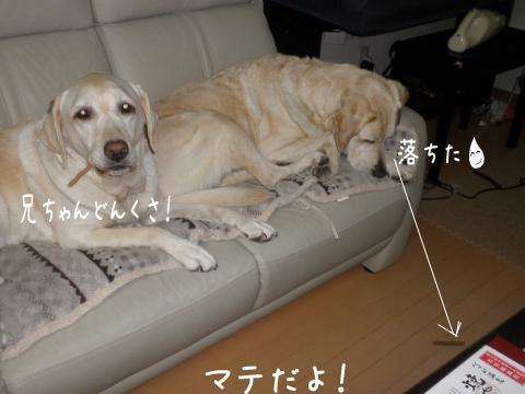 sofa2_20111017211610.jpg