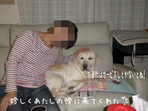 sofa_20111101220747.jpg