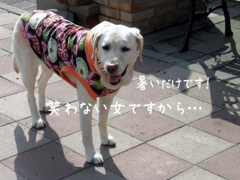 syeri_20110612185948.jpg