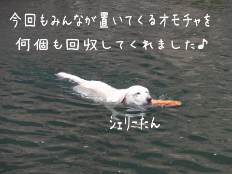 syeri_20110627000436.jpg