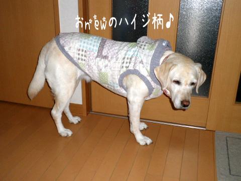 syeri_20111112214741.jpg