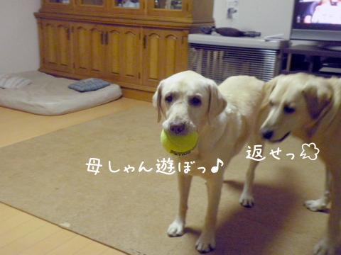 syeriball_20110922214915.jpg