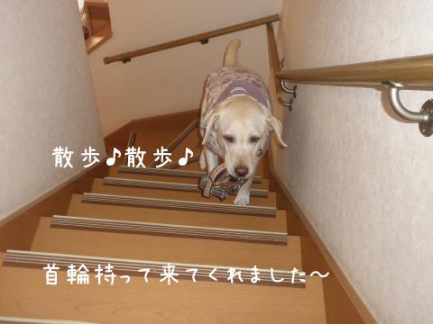 syerikubiwa_20110930221113.jpg
