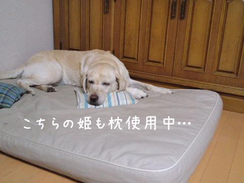 syerimakura_20111109220956.jpg