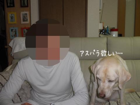 syerisofa_20111010231543.jpg