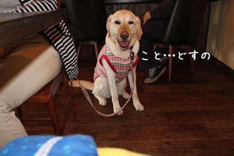 syoukoto.jpg