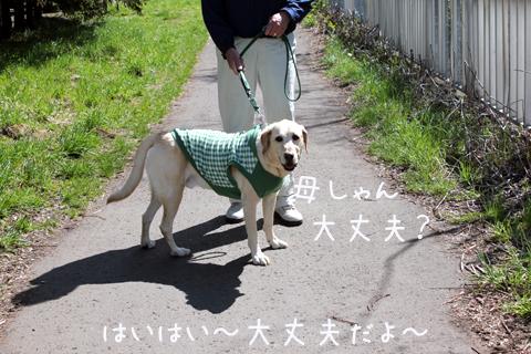 syoumaru.jpg