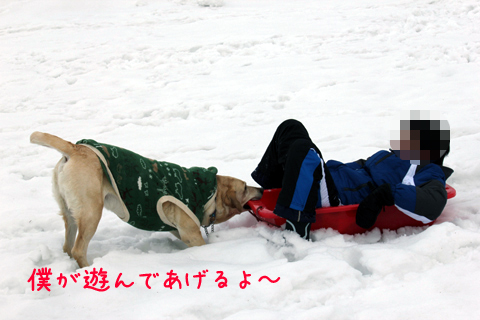 syoumaruryou2.jpg