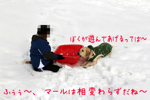 syoumaruryou3.jpg