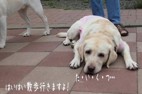 taikutu_20110911225413.jpg