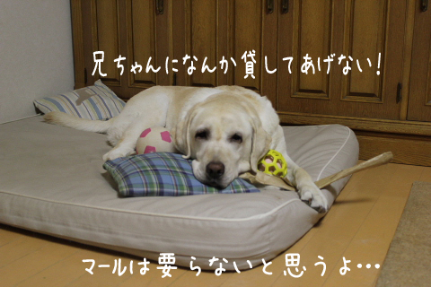 taikutu_20110913225305.jpg
