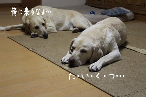 taikutu_20111026220910.jpg