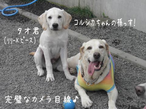 taomaru1.jpg