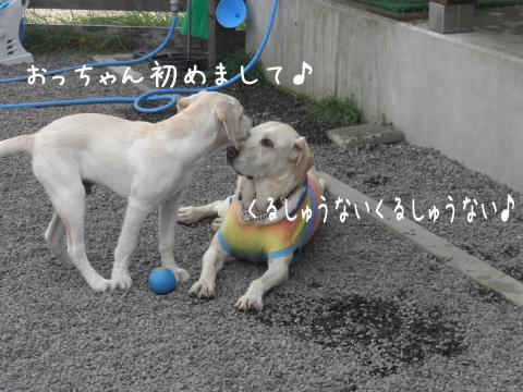 taomaru2.jpg
