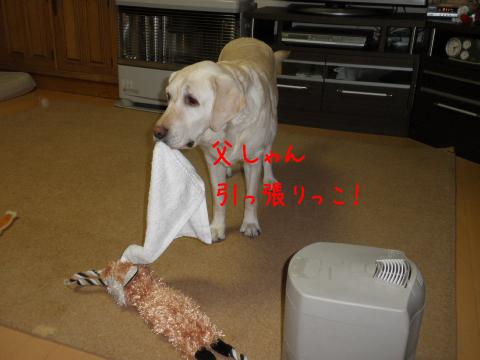 taoru2_20110331221149.jpg