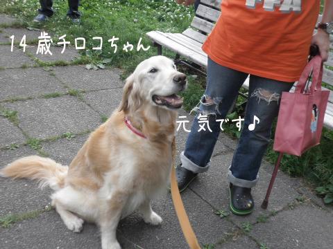 tiroko_20110710211130.jpg
