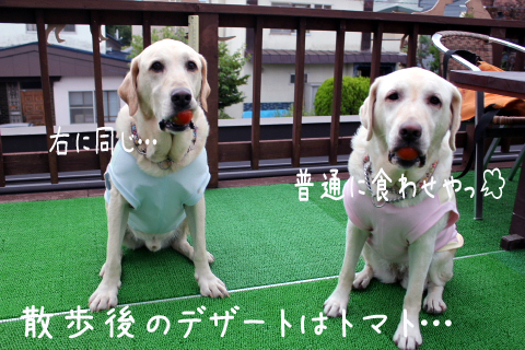 tomato_20110911225927.jpg
