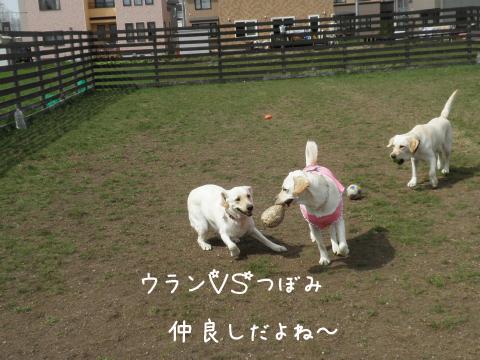 tubomiuran_20110512172934.jpg