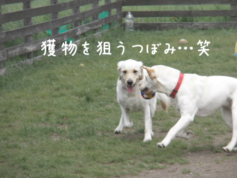 tubomiuran_20110604230131.jpg