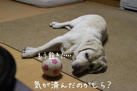 tukareta_20110913225305.jpg