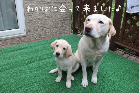 wakaba1_20110913224726.jpg