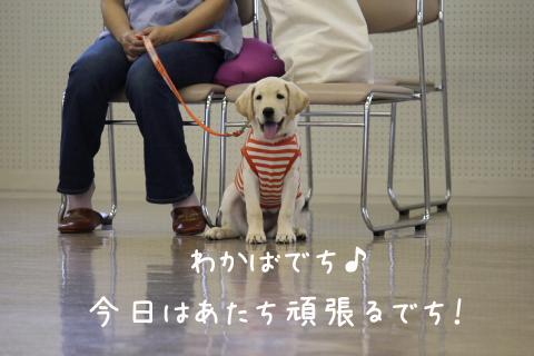 wakaba2_20110919213656.jpg