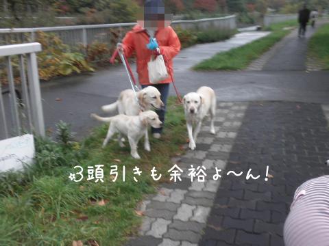 wakaba2_20111012221225.jpg