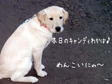 wakaba_20111018220955.jpg