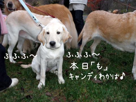 wakaba_20111109215707.jpg