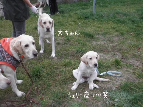 wakabasuwaru_20111014214602.jpg
