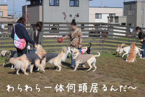 warawara1_20111103232538.jpg