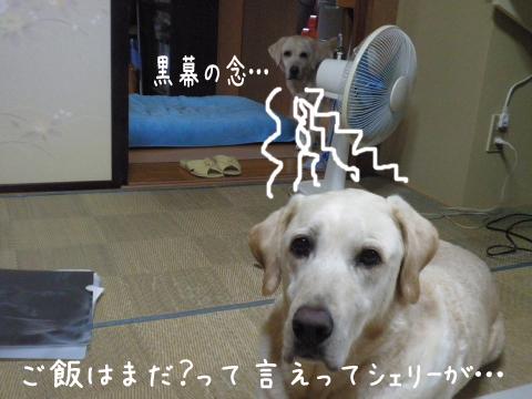 wasitu1.jpg