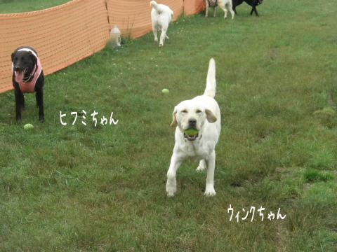 wink_20110719001112.jpg
