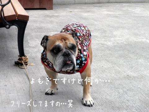 yomogi_20110915202703.jpg