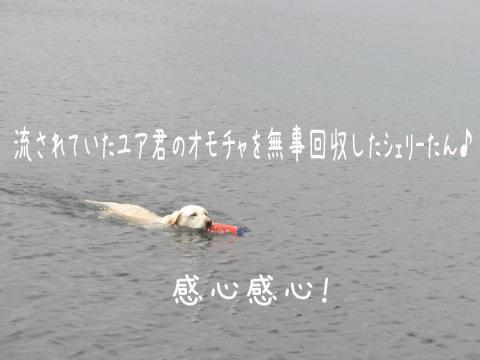 yuaomotya1.jpg