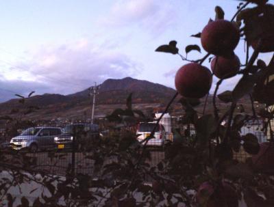 リンゴ畑から高社山(25.11.21)