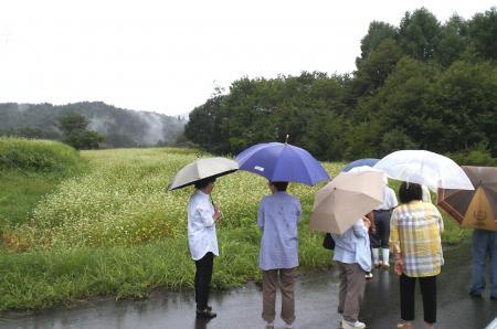 ソバ畑を見学(25.9.15)