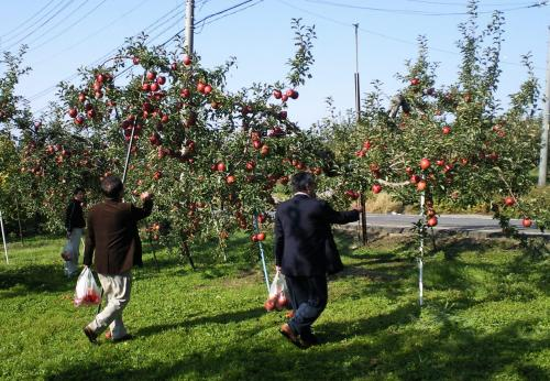 リンゴ狩り(25.11.2)