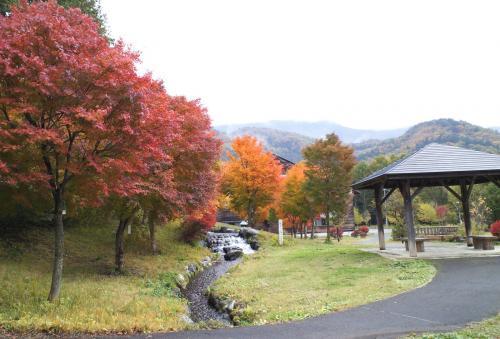 どんぐりの森公園の紅葉(25.11.4)