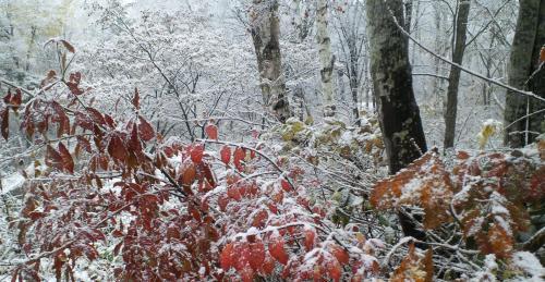 林の中も雪(25.11.11)