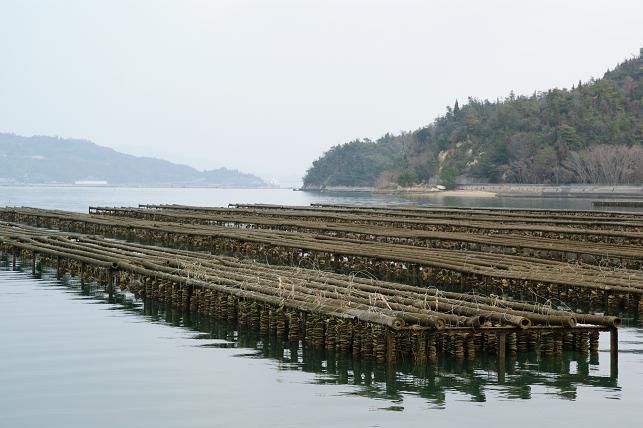 牡蠣筏が広がる