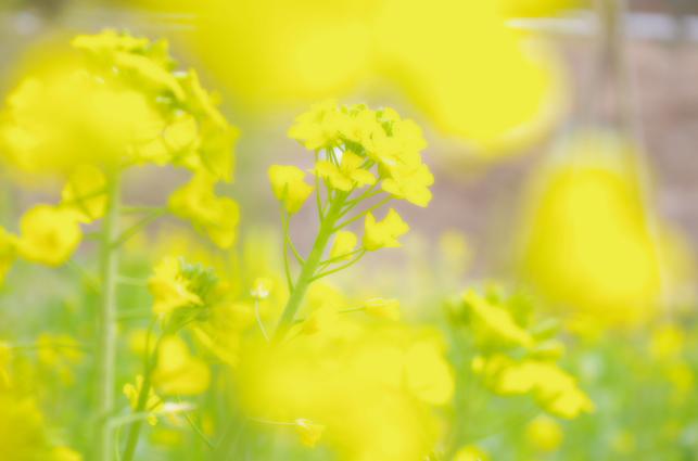 Yellow Filter