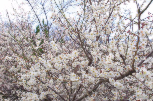 春の雰囲気