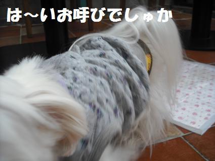 2009_020315.jpg