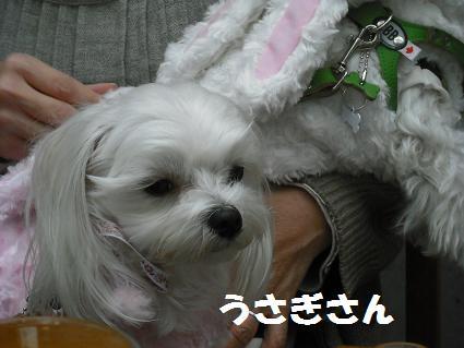 2009_020316.jpg