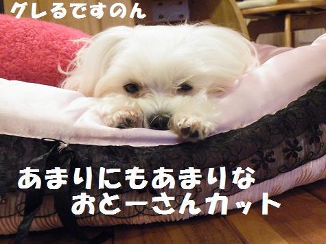 2010_01080007.jpg