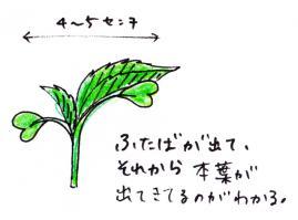 09_01_ill_01.jpg